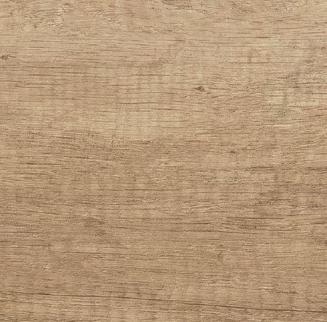 Chêne nebraska