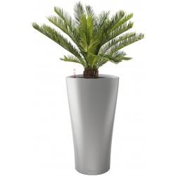 Plantes CYCAS TRONC